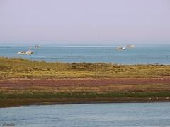 Arrival of mussel producers (Armelle85) Tags: extérieur nature paysage mer océan eau bateaux pêcheur mytiliculteur horizon ciel
