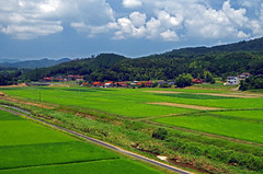 Rice Fields in Mine toward Akiyoshidai, Yamaguchi  山口県 美祢市 (Anaguma) Tags: japan yamaguchi chugoku paddy rice inaka