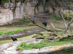 1608 Disney's Animal Kingdom46 (nooccar) Tags: 1806 animalkingdom devonadams devoncadams devonchristopheradams disney disneyworld disneysanimalkingdom june june2018 devoncadamscom devoncadamsgmailcom