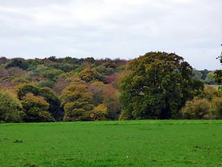 GOC Cholesbury to Chartridge 007: Landscape