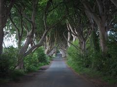 2018-05-31_The Dark Hedges (Ungry Young Man) Tags: norhernireland darkhedges dark hedges trees road got gameofthrones thrones film location filminglocation