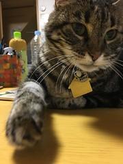 Neko Punch! (sjrankin) Tags: 15august2018 edited animal cat tigger nekopunch table paw closeup livingroom kitahiroshima hokkaido japan