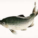 Carp by Kōno Bairei (1844-1895). Digitally enhanced from our own original 1913 edition of Barei Gakan. thumbnail