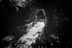 restful path  #829 (lynnb's snaps) Tags: 201807 barnack gorehillcemetery iiif trix xtol film rangefinder leicaiiic leicafilmphotography rangefinderphotography cv21mmf4colorskoparltm kodaktrix400bwfilm kodakxtoldeveloper sydney australia bianconegro bianconero blackwhite biancoenero blancoynegro noiretblanc schwarzweis monochrome ishootfilm peaceful restful path paving arch tree shade shadows