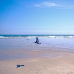 One Bird, Two Birds (Sebastian Sighell) Tags: beach bird ocean sea seashore seascape seaside horizon minimal minimalism minimalist shadow sand water sky