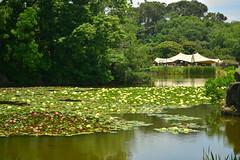 DSC_0103 (sxcxxhx) Tags: japan osaka kyoto hydrangea flower trip voyage 日本 大阪 京都 旅行