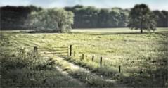 HUIZEN (bert • bakker) Tags: weide meadow bos forest wood hek gate bomen trees pad path nikon50mm18gse huizen noordholland nederland thenetherlands