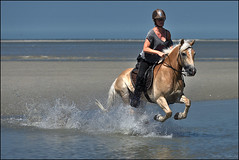 Katze_Tempo_SAS_2480 (SAS Photographie) Tags: beach strand plage letouquet france frankreich pferd horse cheval riding reiten reitsport haflinger nikon d610 afsnikkor nikkor 70200 28