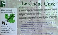 Le chêne-cuve de la Forêt de Brotonne (Philippe_28) Tags: brotonne chêne cuve pédonculé quercus robur oak 76 seinemaritime arbre remarquable awesome tree normandie normandy