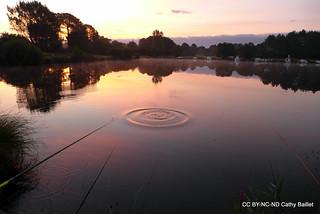 Des ronds dans l'eau, Lac Lily Biscarrosse France 2017