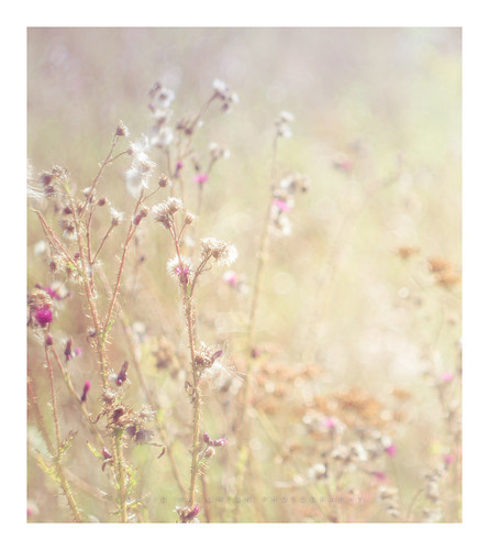 """Secret Meadow • <a style=""""font-size:0.8em;"""" href=""""http://www.flickr.com/photos/110479925@N06/29024442077/"""" target=""""_blank"""">View on Flickr</a>"""