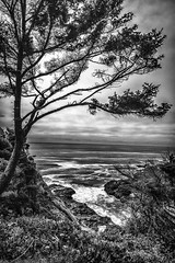 Ocean tree sillouette (Barb Henry) Tags: oregoncoast ocean tree waves blackandwhite wild pacific silhouette beauty nature wind beach
