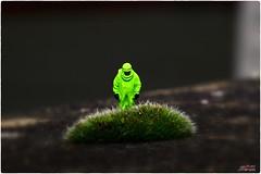 Hazzmat Moss (psychosteve-2) Tags: hazzmat small moss