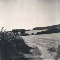 a farm track (»alex«) Tags: polaroid sx70 polaroidoriginals mintcameras squareformat instant film blackandwhite blackwhite bw farm field crop maidstone kent downs bwsx70