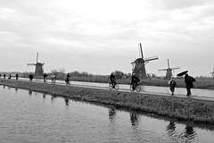 Kinderdijk (YY) Tags: bw blackandwhite blackwhite kinderdijk southholland netherlands windmill windmills