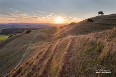 'Ancient Ramparts' (macdad1948) Tags: hill astro dorset hillfort bridport eggardonhill cow spyway askerswell sunset jurassiccoast powerstock ramparts bronzeage