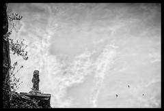 The dreamer's eye / L'oeil rêveur (Napafloma-Photographe) Tags: 2018 architecturebatimentsmonuments aveyron bandw bw bâtiments cielmétéo constructionsprivées détailsarchitecturaux fr france géographie landscape métiersetpersonnages natureetpaysages paysages personnes techniquephoto animaux blackandwhite boutique croix fleur gîte monochrome napaflomaphotographe noiretblanc noiretblancfrance nuages oiseaux paysage photographe province sky belcastel