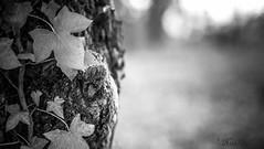 ๖ۣۜL'Hôte / ๖ۣۜThe ๖ۣۜHost (Pilouchy) Tags: nature foret arbres feuilles lumiere vie life green portrait chemin wild monochrome blackandwhite hote