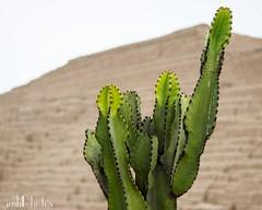 IMG_20180621_202534_649 (IMHPhotos) Tags: cactus ruins peru lima