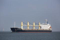 BLUE DRAGON (angelo vlassenrood) Tags: ship vessel nederland netherlands photo shoot shot photoshot picture westerschelde boot schip canon angelo walsoorden cargo bluedragon bulker