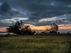 sleeping tree (Thomas Heuck) Tags: kröslin greifswald bodden bay baum tree sonnenaufgang sunrise himmel sky wolken clouds landschaft landscape natur nature meer sea olympus em1markii