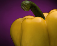 Pepper (finding_fl) Tags: canon canon70d 70d 2018 florida ocalaflorida yellow yellowpepper purplebackground strobist offcameraflash 52weeks 52weeksof2018 52weeksproject studyincolor series 3152 34 fruit stilllife complementarycolors purple actualgelcoloriscalledsangria macro food pepper canonef100mmmacrousm canonef100mmf28macrousm canonefmacrolens macrolens