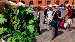 Intrigued tourists at Midsummer market at Dom Square in Old Town of Riga, Latvia. 21 June 2018. (Aris Jansons) Tags: tourists summer square oldtown midsummer market wreath oak city capital riga rīga latvija latvia baltic europe 2018