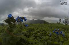 Kenjalgad (soumitra911) Tags: rural scene field horizon over land cultivated meadow landscape countryside idyllic hill scenics rolling scenery flowers green grass clouds monsoon gopro goprohero5 soumitra inamdar kenjalgad raireshwar pune maharashtra india trek shivaji