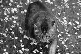 Running on daisies