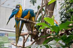 academy of sciences (dolanh) Tags: macaw california sunsetdistrict academyofsciences sanfrancisco parrot goldengatepark roadtrip