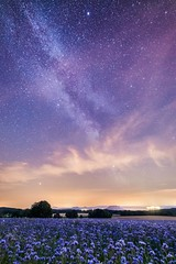 Blue and blue (derliebewolf) Tags: milkyway natur stars irix perseids nature mountains astroscape astrophotography astro saxonswitzerland germany nationalpark field flowers blue clouds lilienstein meteorshower