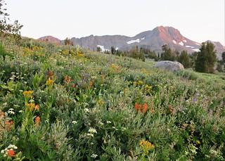 Wildflower Wonderland (Explored)