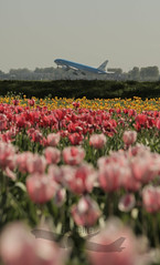 EHAM/AMS 5-5-2018 (flyjelle) Tags: b747 boeing b787 b777 b737 a320 a380 a330 a350 e190 e175 embrear emirates eham ams schiphol flowers airplanes aircraft klm easyjet chinaairlines jetairways carpartair american b757 united singaporeairlines sas delta tails