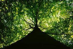I (MobilShots) Tags: blende1net patrickgorden xf23f2 fotografhamburg fuji fujifilm fujinon hamburg natur nature niendorfergehege outdoor wald wood xt1 tree up above green