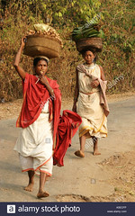 dongria-kondh-tribal-women-carrying-heavy-loads-on-their-way-to-the-A5ECFP (Matriux2011) Tags: barefoot dirtysoles cracksoles indian nepali barefootextreme talonescurtidos piesrajados
