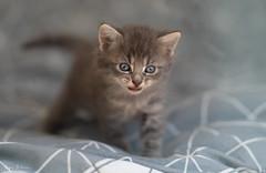 (JBA-77) Tags: kittens animal animals cat cats cute