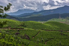 High Tea (gecko47) Tags: india landscape plantations tea bushes mosaic mountains clouds mist green nilgirihills