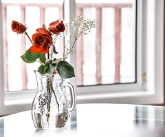 Have a happy weekend you all... (sruthyanu) Tags: indoors inside home new fun stilllife water vase plants flickr nikon me ontario sunlight colour colours nikor lines red rose flora bright weekend happy