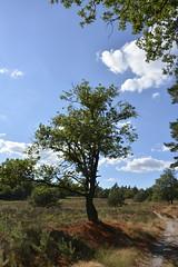 rood_D710233 (Vogelmelk) Tags: droogte gelderland reeenberg bos veluwe
