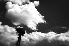 nature of technology (Neko! Neko! Neko!) Tags: blackandwhite blackwhite bw mono monochrome clouds sky stork nature technology contrast harmony fusion lensbaby