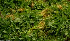 Organic Vegitables (Balaji Photography - 5 M views and Growing) Tags: organic ecology ecosystem ecofriendly ecobalance health nutrition goodhealth iron vitamins healthylife