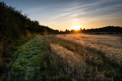DSC_0111.jpg (nafenic) Tags: nikon d5300 dslr kitlens 1855mm afp isleofwight holidays travel vacation dusk twilight sunset sundown fields landscape
