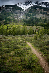 Lupine Meadow Pathway (59roadking - Jim Johnston) Tags: ifttt 500px lupine meadow grand teton wyoming national park mountain forest