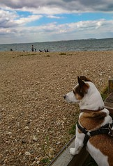What am I thinking? (kellylwood81) Tags: dog beach sea sky clouds kent whistable jackrussell sony xperia cell perro uk england seaside