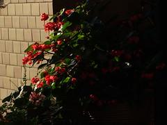 Neuer Morgen 004 (bratispixl) Tags: fotosafari oberbayern germany bratispixl tele lichtwechsel schärfentiefe fokussierung bergwelt spot outdoor indoor architektur landschaft grat hügel wasser sonnenfotografie see flus tiere nature nigth day spuren blumen wolken video