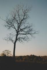 006.jpg (Tai Moura) Tags: kodak film filme 35mm proimage 100 trip100r olympus olympustrip100r lomo lomography lomografia