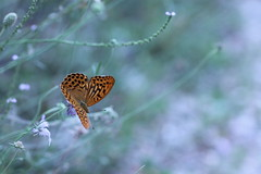 prova (@5imonapol) Tags: butterfly bug summer august wild life poetry