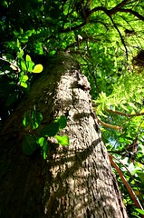 Green tree (Rich J Photo) Tags: trees tree green forrest sky up photography photo photograph photographer nikon d7000 natureporn natural nature pretty 2018 august instagram hashtag greatbritain uk usa america worldwide world southwales swansea llanelli gorseinon penllegear woods wood branches branch twig twigs leaf leaves climb dirt dirty tall greatoutdoors outdoors beautiful beautifulview outside