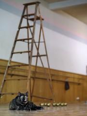 Little Cat, Ladder, and Golden Apples (fingle) Tags: nouveauchamberballet loisellynstudio lookingforwardlookingback studiorehearsal fullerton california rehearsal dance ballet