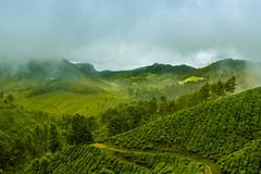 Munnar (Irumporai_A) Tags: godsowncountry kerala munnar hills hillstation teaplantation india landscape canon